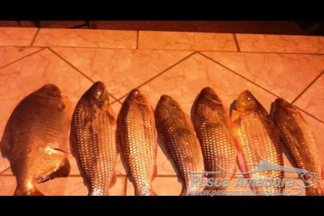 PMA autua pescador por transporte ilegal de pescado capturado no Rio Miranda-MS