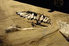 PMA combate pesca ilegal e apreende pescado e tarrafas no MS 2
