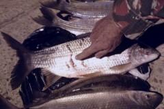 PMA combate pesca ilegal e apreende pescado e tarrafas no MS 4
