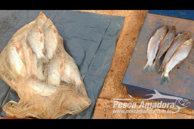 pma-e-prf-prendem-em-flagrante-homem-por-transporte-de-pescado-ilegal-em-ms