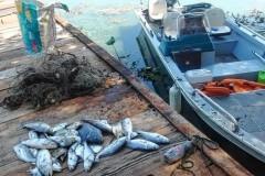 PMA flagra pesca ilegal no Rio Tiete e apreende 200m de redes em Bariri-SP