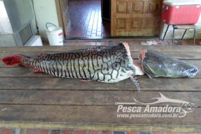 pma-multa-tripulante-de-embarcacao-cargueira-por-pesca-ilegal-no-rio-paraguai-em-ms
