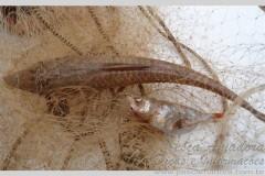 PMA prede dois por pesca predatoria e apreende sete redes no rio Ivai-PR
