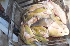PMA prende dois com 140 kg de pescado ilegal e aplica multa de R$ 6,8 mil em MS 2