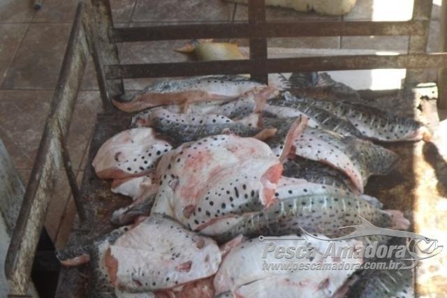 PMA prende dois com 140 kg de pescado ilegal e aplica multa de R$ 6,8 mil em MS