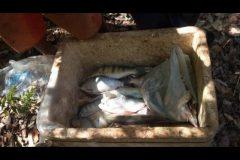 pma-prende-dois-com-700-metros-de-redes-e-100-kg-de-pescado-ilegal-em-goias-6