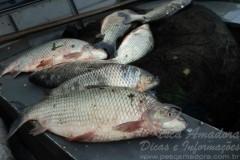 PMA prende dois pescadores profissionais por pesca predatoria em MS 2