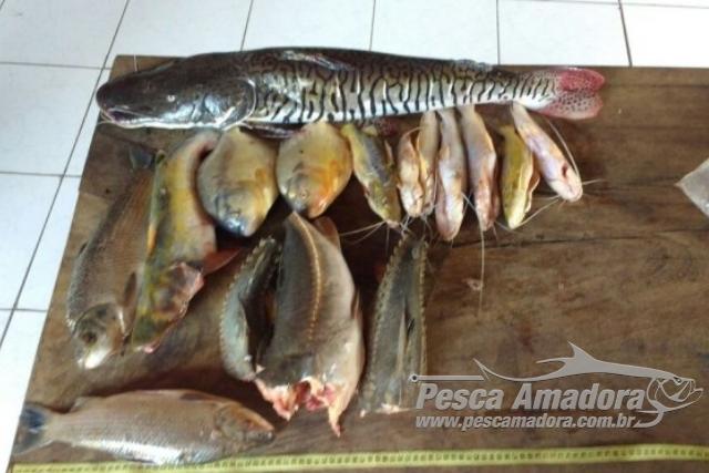 PMA prende dois por capturar pescado fora da medida no rio Aquidauana-MS