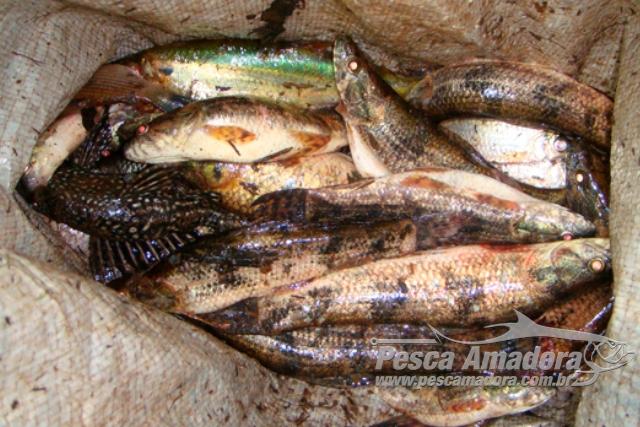 PMA prende duas pessoas por pesca ilegal no rio Dourados em MS