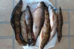 PMA prende dupla por pesca predatoria na represa capivara no Parana 2