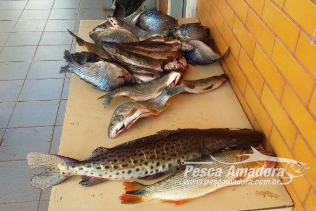 pma-prende-foragido-durante-flagrante-de-pesca-predatoria-no-rio-parana-ms