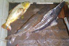 pma-prende-homem-por-pesca-ilegal-no-rio-miranda-ms-2