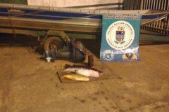 pma-prende-homem-por-pesca-ilegal-no-rio-miranda-ms