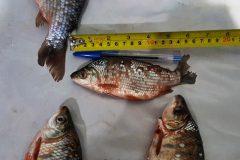 PMA prende homem por transporte de pescado ilegal no MS 2