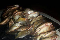PMA prende infrator e apreende cerca de 20 kg de pescado ilegal em Goias 2