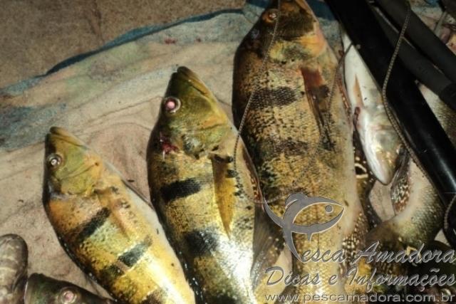 PMA prende infrator por pesca ilegal no Rio Parana em MS