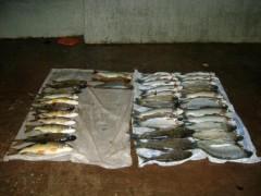 PMA prende jovem por pesca predatoria no MS