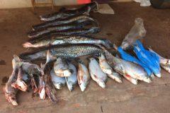 pma-prende-pescador-amador-com-130-kg-de-pescado-ilegal-no-parana-2