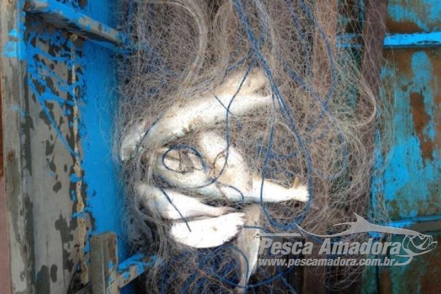 PMA prende pescador profissional com redes de pesca e local proibido no MT