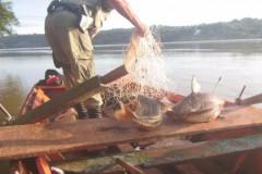 PMA prende quatro paraguaios por pesca ilegal no Rio Parana 3