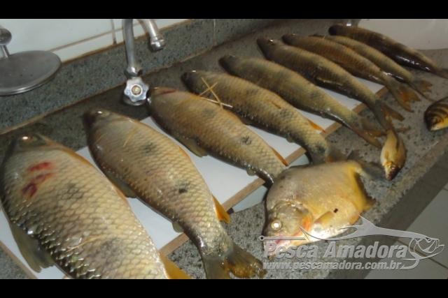 PMA prende seis pessoas por pesca ilegal nas proximidades de hidreletrica no Rio Parana-MS