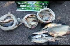 PMA prende tres e apreende 107 kg de pescado ilegal no Parana