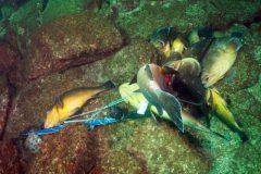 pma-procura-responsaveis-por-pesca-ilegal-na-laje-de-santos