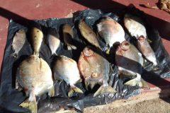 PMA reforca a fiscalizacao de pesca nos rios do estado de Goias 4
