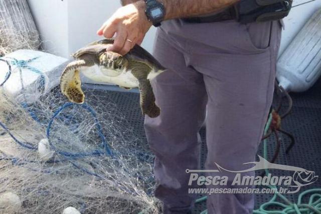 PMA resgata tartarugas presas em redes ilegais em Baraquecaba litoral Norte de SP 2