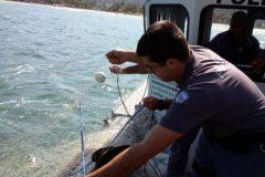 PMA resgata tartarugas presas em redes ilegais em Baraquecaba litoral Norte de SP