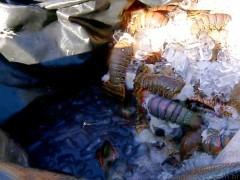 PRF apreende 165kg de lagosta no RN