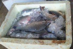 prf-apreende-50-kg-de-pescado-ilegal-em-abadia-de-goias-go