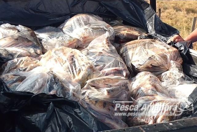 prf-apreende-530-kg-de-pescado-transportados-de-forma-irregular-em-goias
