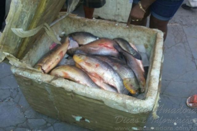 PRF apreende mais de uma tonelada de pescado na BR-060 5
