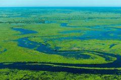 pantanal-biodiversidade-2