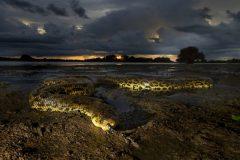 pantanal-sucuri