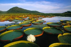 pantanal-vitoria-regea