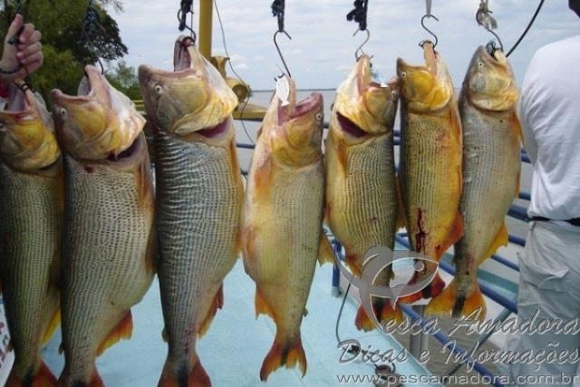 Paraguaios acusam Brasileiros de pesca predatoria em Ayolas-PY 2