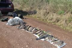 Patram apreende pescado e rede de pesca em Alegrete-RS