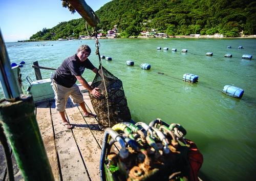 Paulo Constantino foi o pioneiro e hoje e um dos principais produtores de ostras