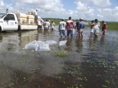Peixamento realizado pela Codevasf em Alagoas