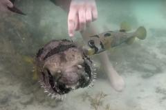 Peixe nao abandona companheiro que ficou preso em rede de pesca 3