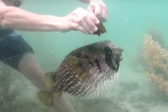 Peixe nao abandona companheiro que ficou preso em rede de pesca 5