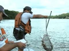 Peixes aparecem mortos no Rio Grande proximo a hidreletrica de marimbondo 2