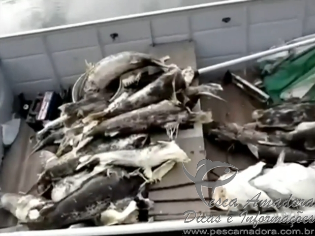 Peixes aparecem mortos no Rio Grande proximo a hidreletrica de marimbondo
