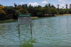 Peixes contaminados sao vendidos ilegalmente em Belo Horizonte 4