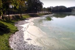 Peixes contaminados sao vendidos ilegalmente em Belo Horizonte 6