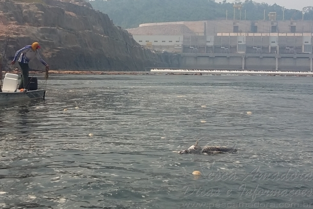 Peixes continuam morrendo na Usina Teles Pires