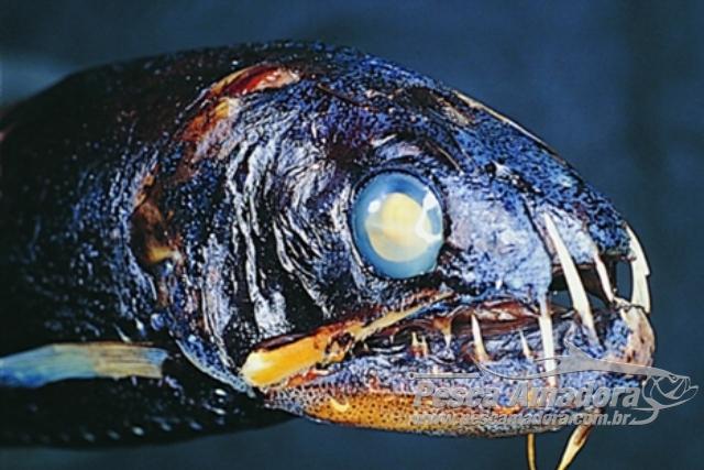 Peixes do abissal 13