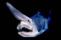 Peixes do abissal 4